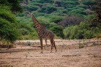 Safari Day 2-85