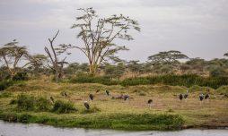Safari Day 3-119