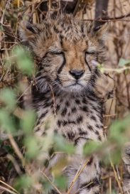 Safari Day 3-33