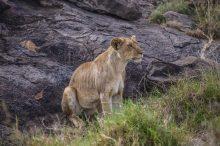 Safari Day 3-54