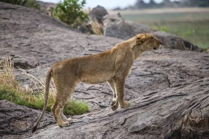 Safari Day 3-58