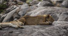 Safari Day 3-60