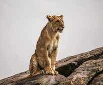 Safari Day 3-76