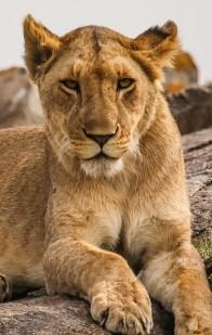 Safari Day 3-77