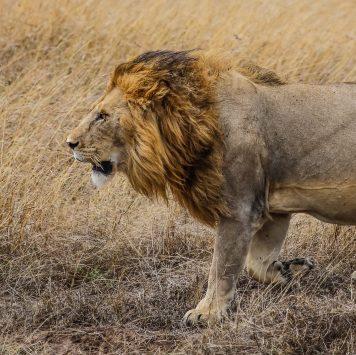 Safari Day 4-39