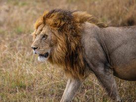 Safari Day 4-45