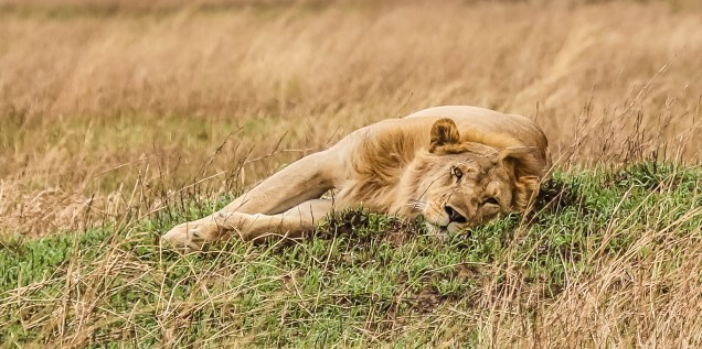 Safari Day 4-71