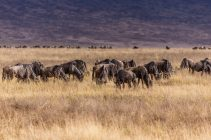 Safari Day 5-13