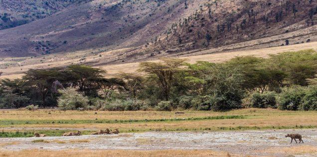 Safari Day 5-53
