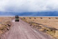 Safari Day 5-57