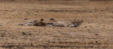 Safari Day 5-6