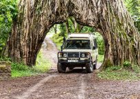 Safari Day 6-21