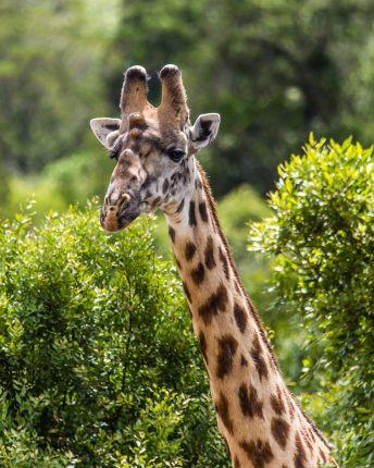 Safari Day 6-36