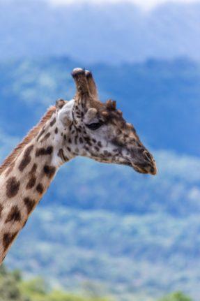Safari Day 6-39