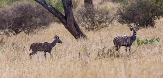 Safari Day 7-33
