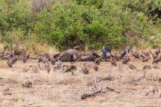 Safari Day 7-4