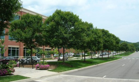 Athena® Classic Elms in the landscape