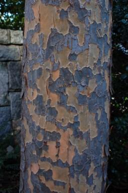 Athena® Classic Elm Bark