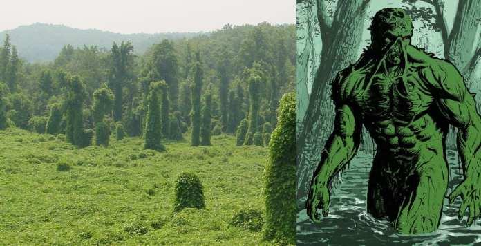 Why are some species so invasive? [Invasive Species, Part 1]