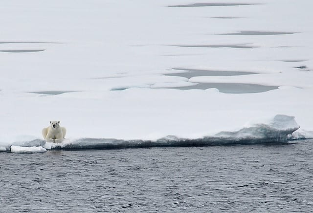 On thin ice: polar bear conservation in the midst of climate change