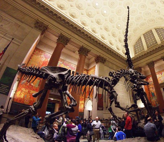 BINGO, Dino DNA: Can we create a dinosaur?