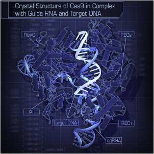 600px-Crystal_Structure_of_Cas9_in_Complex_with_Guide_RNA_and_Target_DNA