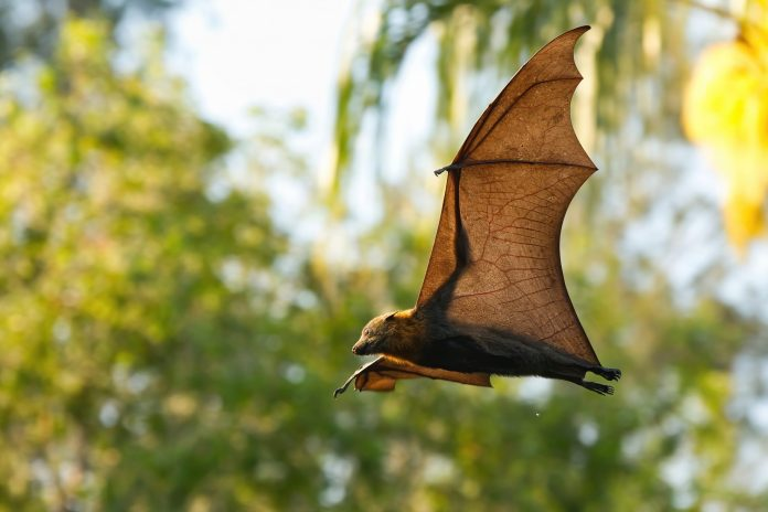 Bats, One Health, and Emerging Infections