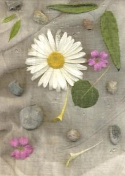 Digital Image - Nature