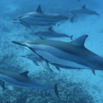 Staying In Shape Has Great Benefits – Dolphins In Hawaii!