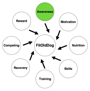 The FitOldDog Training Wheel starts with the development of mind and body awareness, which can be a hard nut to crack. From: http://goo.gl/Es6PF