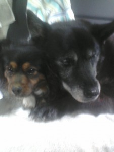 Nickel, deceased, with Scooter, FitOldDog's lovely canine companions for years.