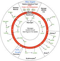 FitOldDog's image of energetics