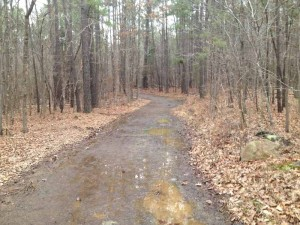 Early spring trail in North Carolina.