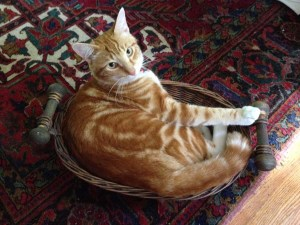 FitOldDog's cat, Cat, in basket.