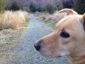 FitOldDog loves this walking trail