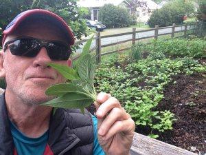 FitOldDog enjoying herbs, ITBS