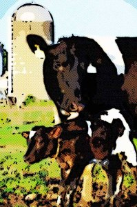 enlarged prostate: cow and calf