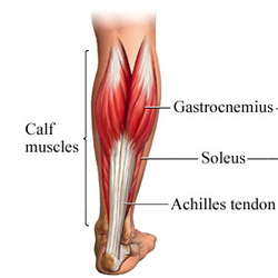 Older Athletes Need Stronger Calves | The Athletic Time