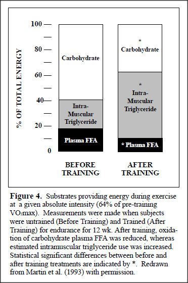 FAT METABOLISM DURING EXERCISE (4/4)