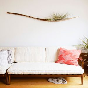 Here, Tillandsias are affixed to a piece of wood with nontoxic, waterproof glue. You can spray or mist the plant to water it; fertilizer can be added to the spray.