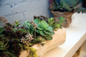 organic elements, Succulents