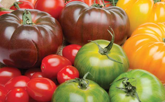 Taste of Tomato: A Way To Sample Love Apples