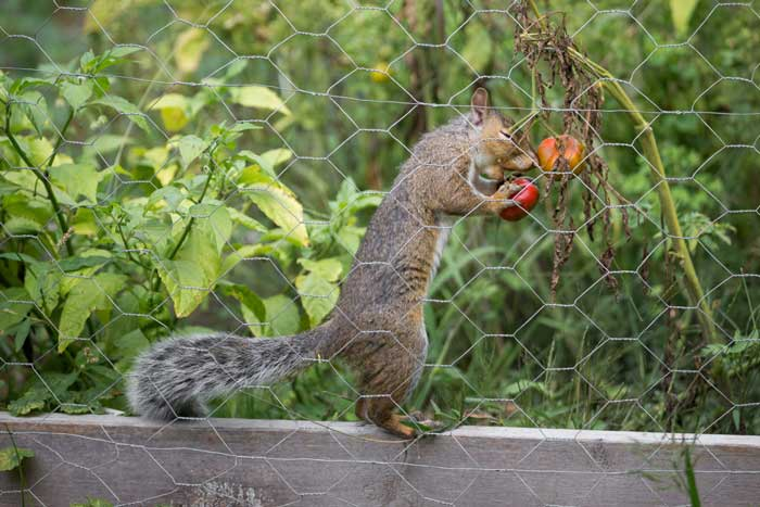 The Struggle with Squirrels is Real