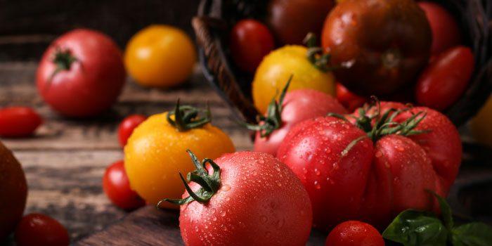 Taste of Tomato