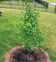 Trees plant hope