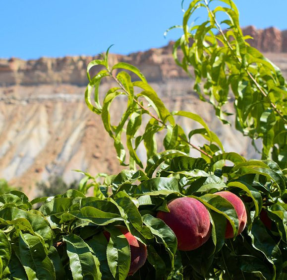 Colorado Produce Harvest is Starting. Why Should We Care?