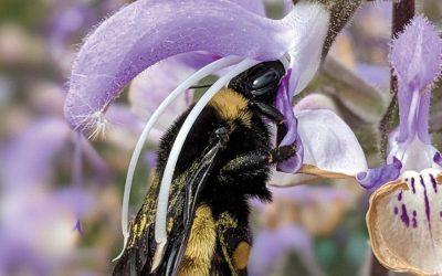 June is Colorado Pollinator Month