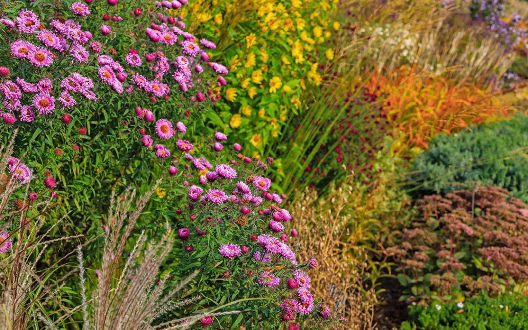 Fall garden tasks