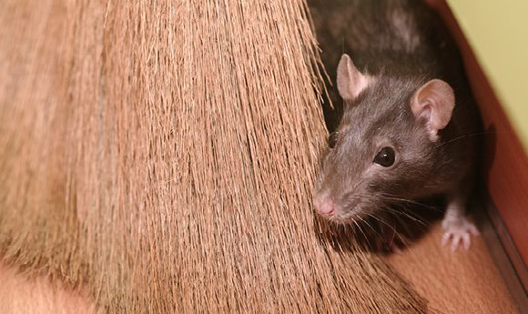 The Lighter Side: Unwanted houseguests: Mice and squirrels