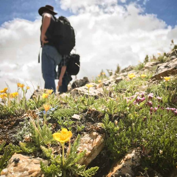 Travel Montana Absaroka-Beartooth Wilderness Trails